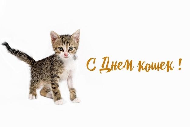 Piccolo a strisce di 1,5 mesi, che cammina verso. l'iscrizione è il giorno dei gatti.