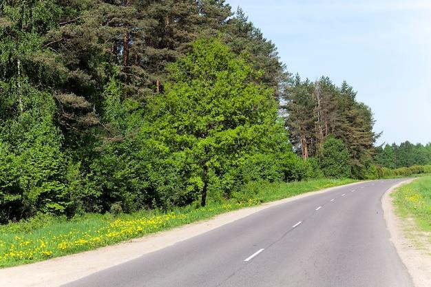 Una piccola strada asfaltata che attraversa il bosco. primavera