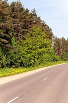 Una piccola strada asfaltata che attraversa il bosco.