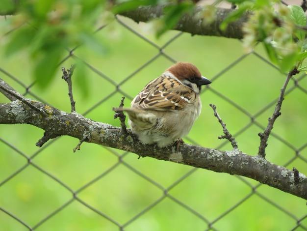 Un uccellino in natura in un piccolo giardino del villaggio