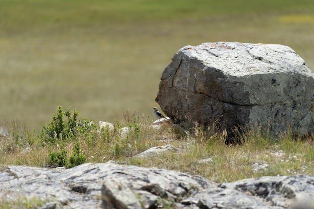 Un uccellino si siede su una grossa pietra