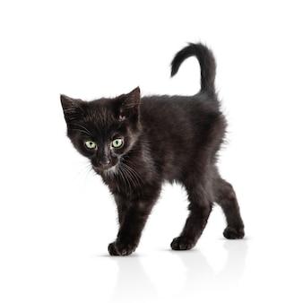Piccolo gattino nero isolato su sfondo bianco. età del gattino 2 mesi