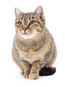 Piccolo gattino marrone isolato su sfondo bianco.