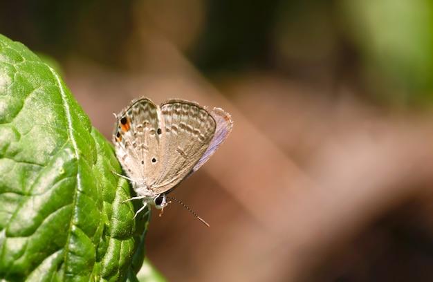 Una piccola farfalla sulla superficie della foglia di spinaci