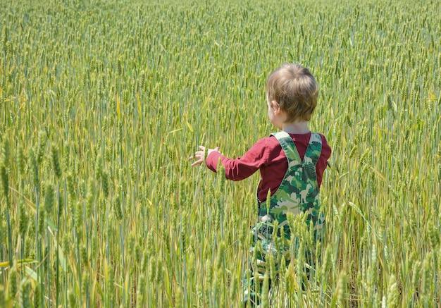 Un bambino piccolo in un campo di grano sta con le spalle allo spettatore