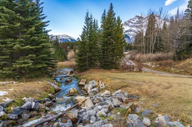 Piccola insenatura e sentiero nella foresta con neve non sciolta in inverno.