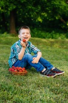 Un piccolo ragazzo carino è seduto con una grande scatola di fragole mature e deliziose. raccolto. fragole mature. bacca naturale e deliziosa.