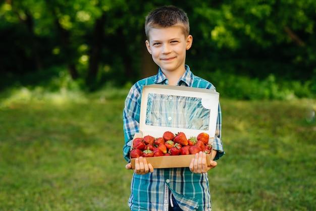 Un piccolo ragazzo carino sta con una grande scatola di fragole mature e deliziose. raccolto. fragole mature. bacca naturale e deliziosa.