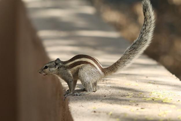 Piccolo simpatico scoiattolo su una superficie di pietra nel parco