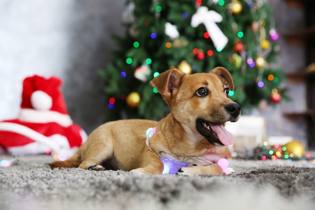 Piccolo simpatico cane divertente con ghirlanda su sfondo natalizio