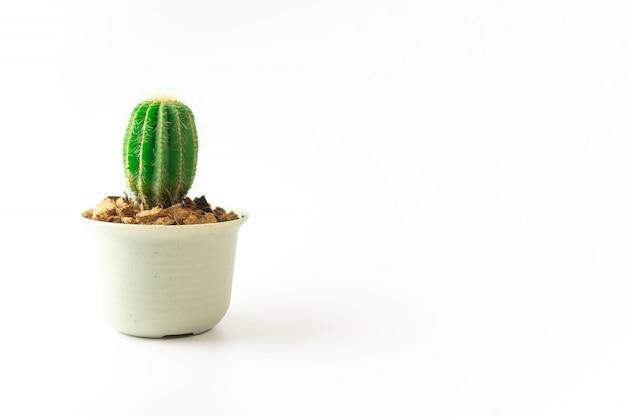 Stile minimo della piccola pianta sveglia su fondo bianco.