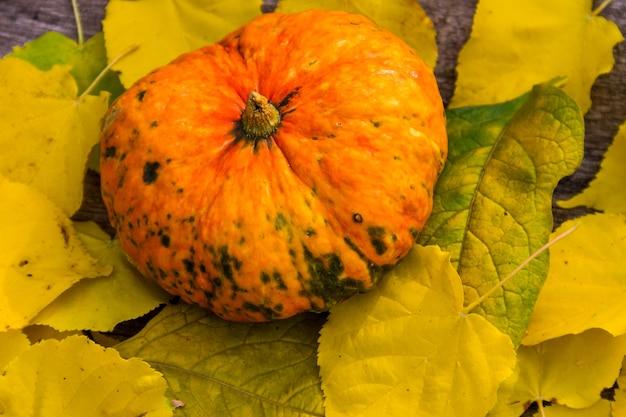 Piccola zucca decorativa su foglie gialle. raccolto autunnale, ringraziamento o concetto di halloween
