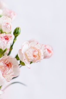 Piccolo bianco delicato con fiori di garofano rosa bordo su uno sfondo bianco, copia dello spazio