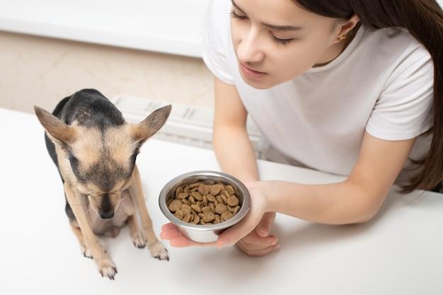 Un cane di piccola taglia si rifiuta di mangiare mangime, si allontana da una ciotola di cibo, cibo insapore, un segno della malattia di un animale domestico