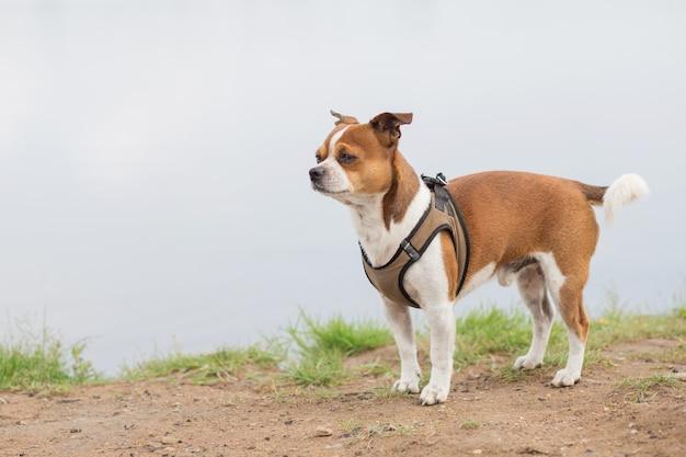 Piccolo cane in piedi sulla spiaggia al giorno d'estate