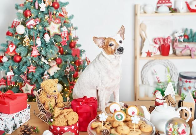 Piccolo cane in piedi accanto alle decorazioni natalizie