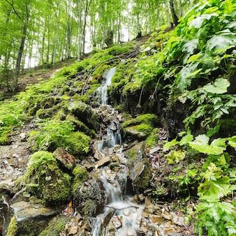 Piccolo ruscello veloce nella foresta che scorre tra le pietre
