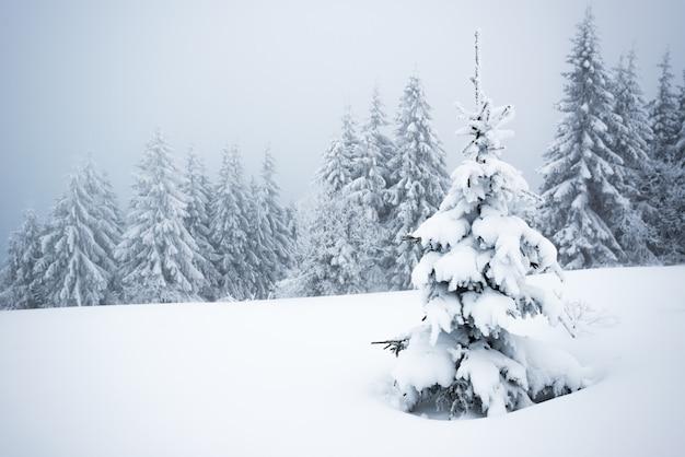 Piccolo fragile albero coperto di brina