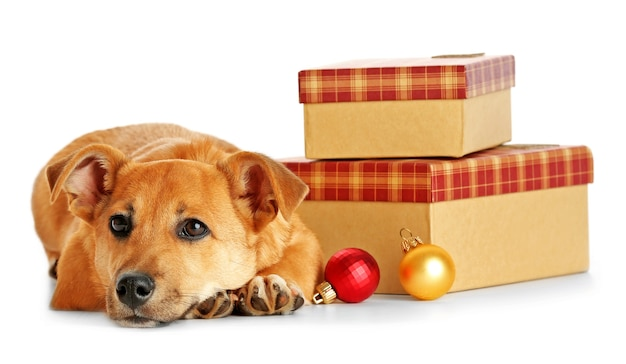 Piccolo e divertente cane carino sul tavolo con regali e giocattoli di natale, isolato su bianco
