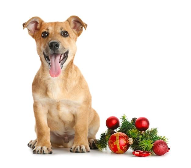 Piccolo e divertente cane carino con giocattoli di natale, isolato su bianco