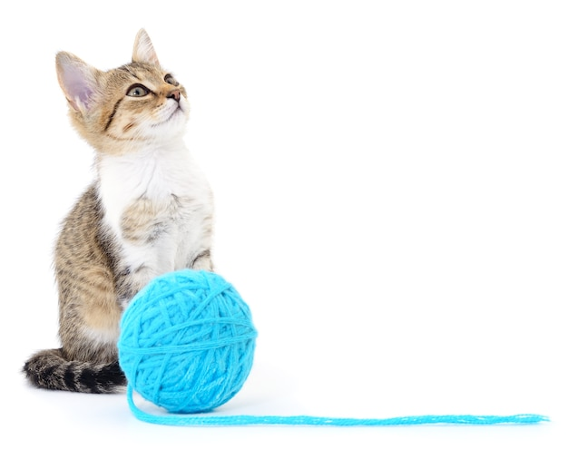 Piccolo gattino divertente e bugna di filo. isolato su bianco