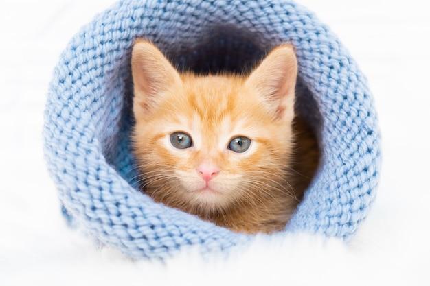 Il piccolo gattino tabby allo zenzero si crogiola dolcemente e guarda la telecamera con un cappello blu lavorato a maglia