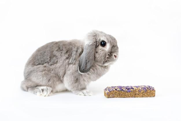 Un piccolo coniglio grigio dalle orecchie pendenti con una pallina nelle vicinanze. il concetto di prendersi cura degli animali domestici.
