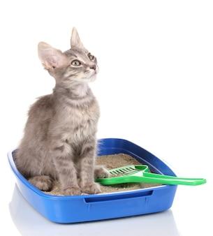 Piccolo gattino grigio nel gatto della lettiera di plastica blu isolato su bianco