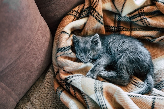 Un piccolo gattino grigio dorme su una coperta di lana. infiammazione della terza palpebra nei gatti.