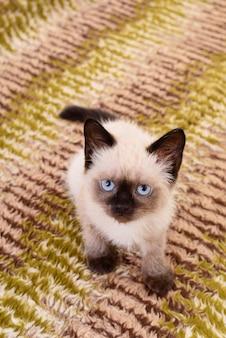Piccolo gattino grigio rappresentato su sfondo tessile