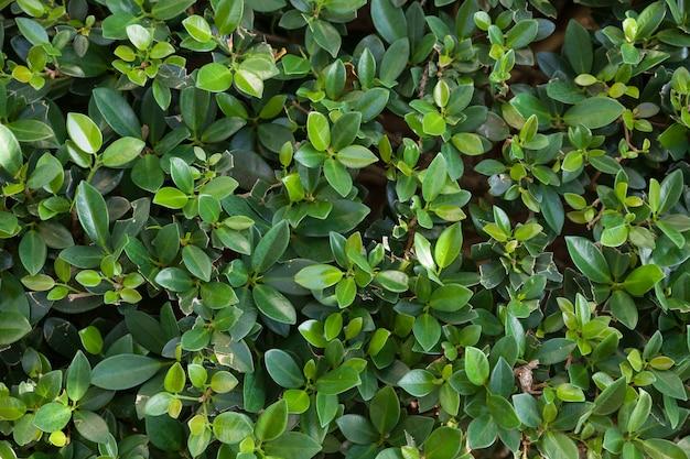 Piccolo sfondo verde con foglie minuscole