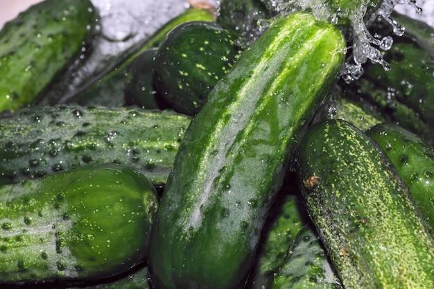 I piccoli cetrioli verdi vengono lavati sotto un flusso di acqua pulita macrofotografia ravvicinata