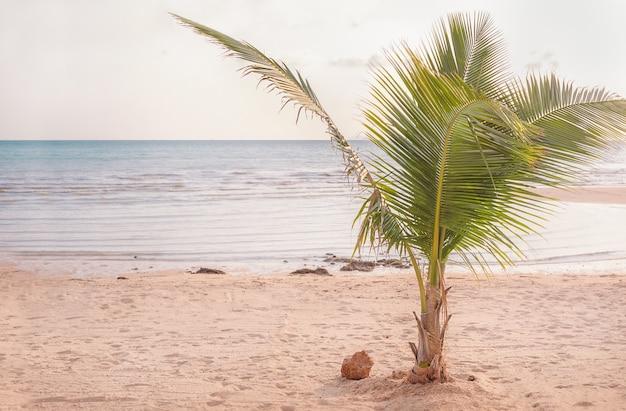 Piccola palma verde sulla spiaggia