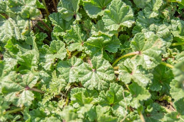 Piccolo terreno erboso con petali verdi