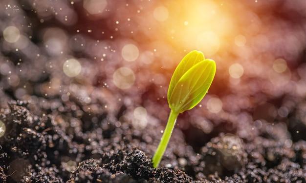 Piccola pianta verde che cresce dal mucchio del terreno