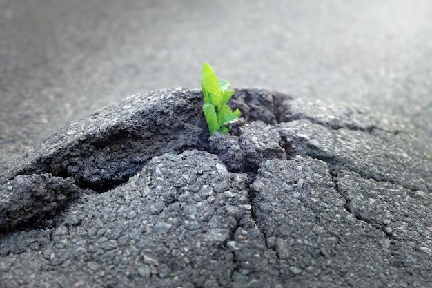 Una pianta piccola e verde cresce attraverso il terreno asfaltato urbano