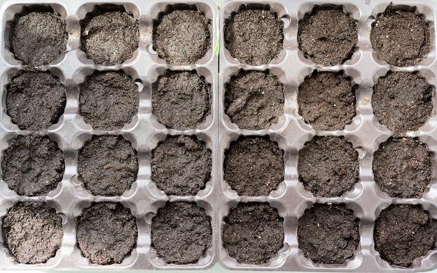 Piccoli germogli in crescita in contenitori per piante in plastica, giardinaggio, piantagione a casa. uomo che semina i semi nella scatola di germinazione, un mucchio di piantine che crescono all'interno di vasi all'interno di un vivaio in serra.