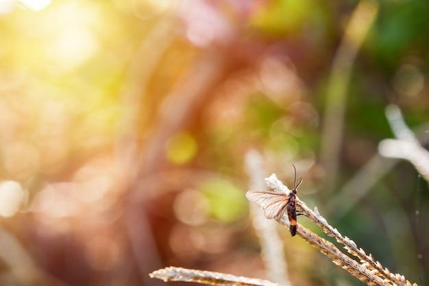 Il piccolo insetto espande le ali rilassandosi sull'erba con un bellissimo sfondo naturale.