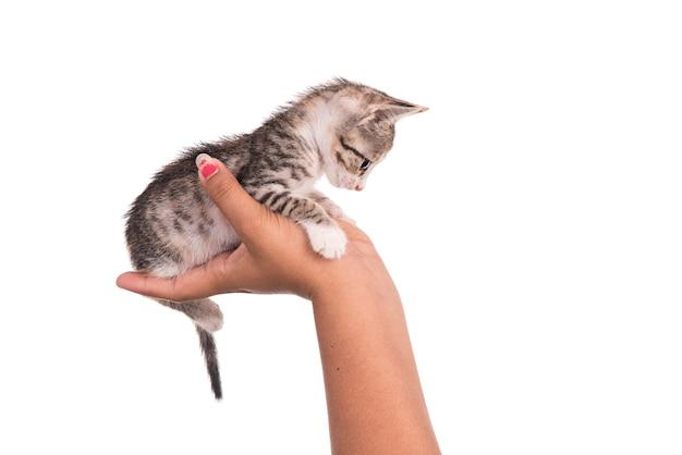 Piccolo gattino in mano umana su sfondo bianco