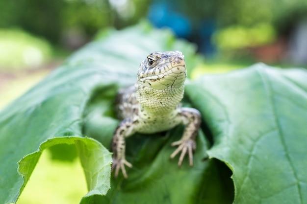 Piccola lucertola su una foglia verde