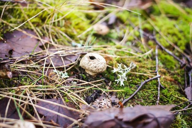 Piccolo impermeabile a forma di fungo che cresce nella foresta autunnale