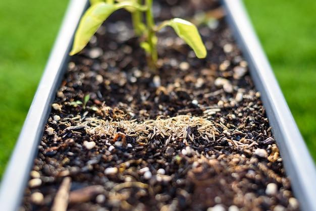 Piccolo mucchio di semi di erba sulla torba di una pentola su una terrazza a casa.