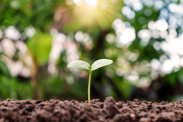 Piccola pianta che cresce sul suolo e su sfondo verde sfocato. concetto di crescita delle piante.