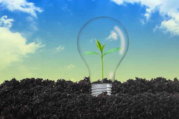 Piccola pianta in lampadina, concetto di ambiente terrestre.
