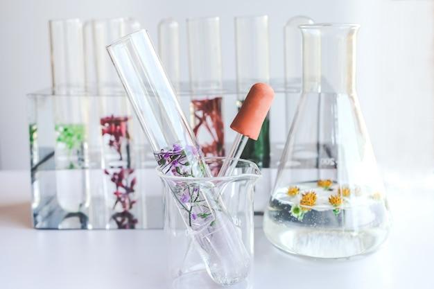 Piccole piante in provetta per la ricerca di medicina biotecnologica.