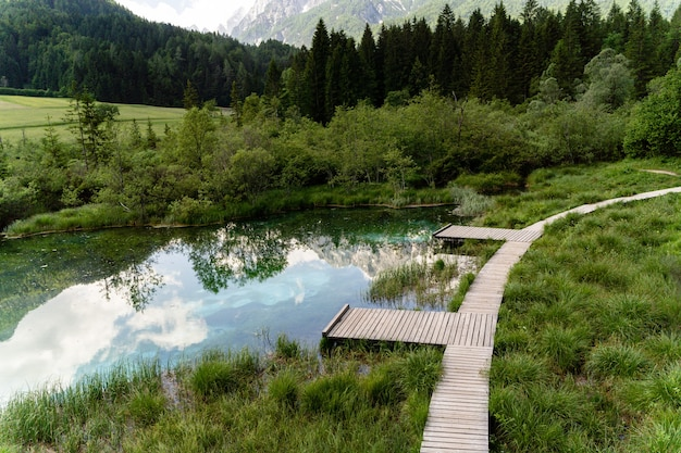 Piccolo laghetto vicino agli alberi nel parco del triglav, slovenia