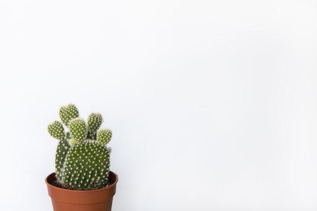 Piccolo ficodindia cactus in vaso marrone in uno sfondo bianco, copia dello spazio. vista frontale.
