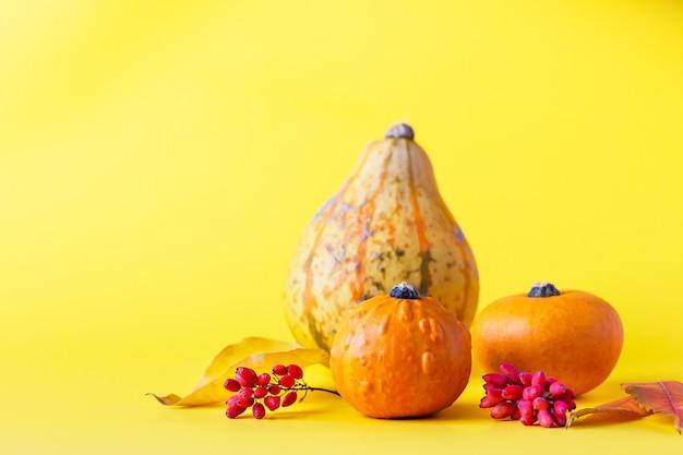Piccole zucche, foglie secche e bacche su sfondo giallo. concetto di autunno, caduta o halloween.