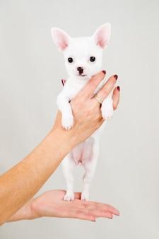 Piccolo cucciolo di razza su bianco