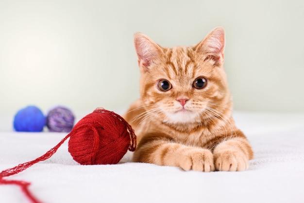 Un piccolo gattino dai capelli rossi su un letto leggero giace con fili.